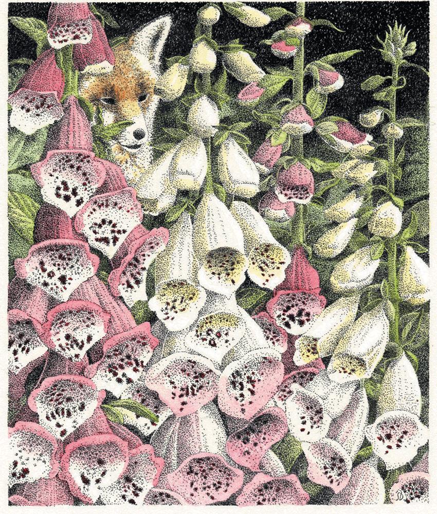 Cover Art: Slightly Foxed Issue 14, Simon Dorrell, 'Foxgloves'