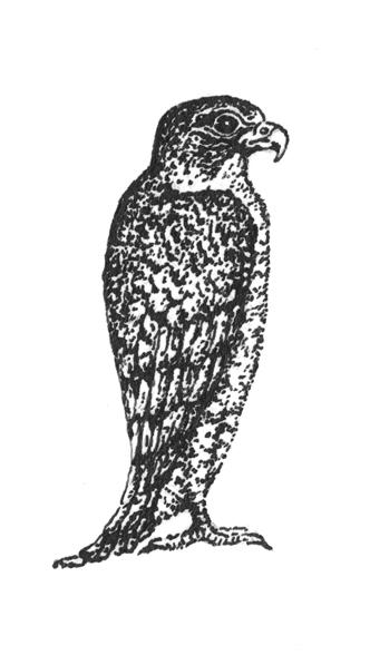 Derek Parker on Dashiell Hammett, The Maltese Falcon