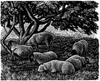 Wood engraving by Howard Phipps, Noonday Shade - Ursula Buchan on W. H. Hudson, A Shepherd's life