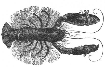 Joan Hassall, Lobster - Morag MacInnes on Eric Linklater Slightly Foxed Issue 43