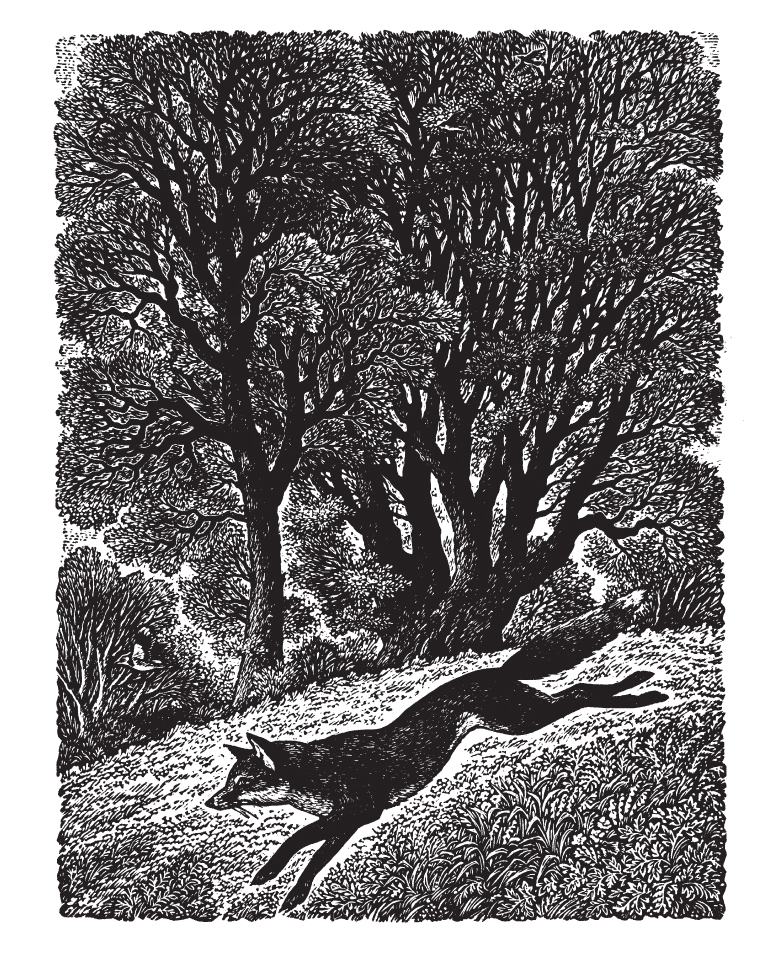 Sue Scullard - Dashing Fox