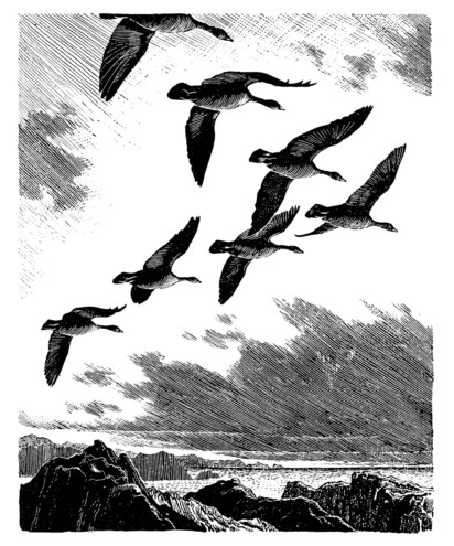 C. F. Tunnicliffe, Geese - Galen O'Hanlon on Aldo Leopold