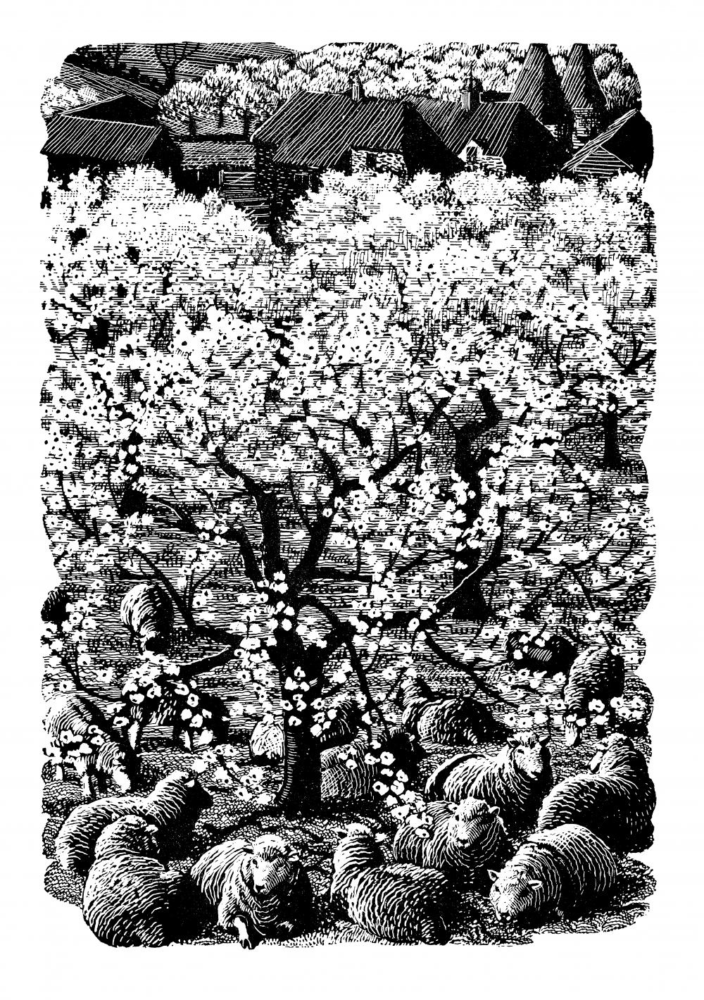 C F Tunnicliffe - The Cherry Tree