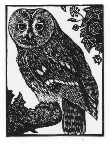Kathleen Lindsley, Tawny Owl Issue 43