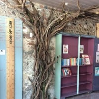 Slightly Foxed Autumn Bookshop of the Quarter: Much Ado Books. Tree Trunk.