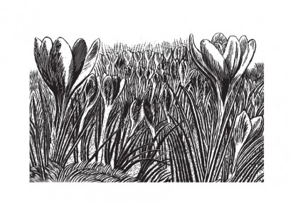 Rosalind Bliss, Crocuses - Issue 33
