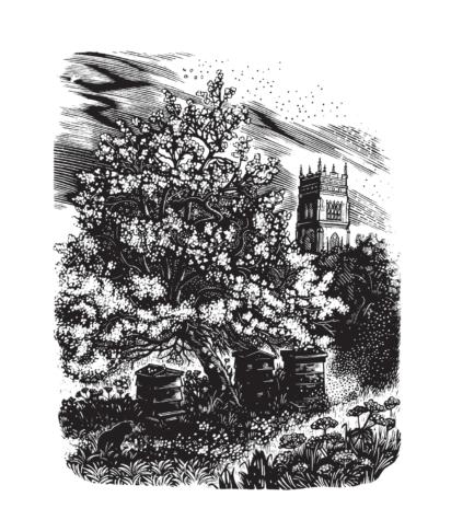 Miriam McGregor - Somerset Garden