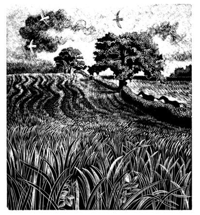 Anne Hayward Sarah Perry Article John Moore The Blue Field