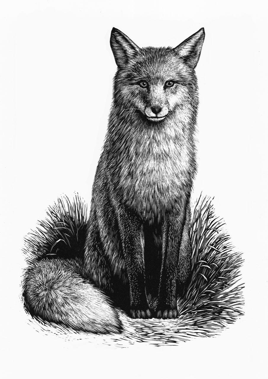 Chris Wormell Slightly Foxed Fox Web