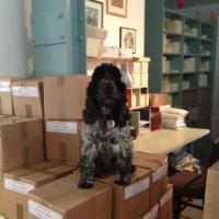 Chudleigh - Slightly Foxed office dog