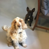 Stanley & Dusty - Slightly Foxed office dogs