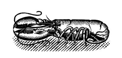 Morag MacInnes, F.-M. McNeill, The Scots Kitchen
