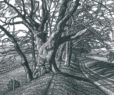 Melissa Harrison on Oliver Rackham, The Illustrated History of the Countryside