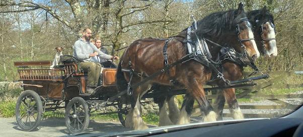Horse and Cart | Editors' Diary