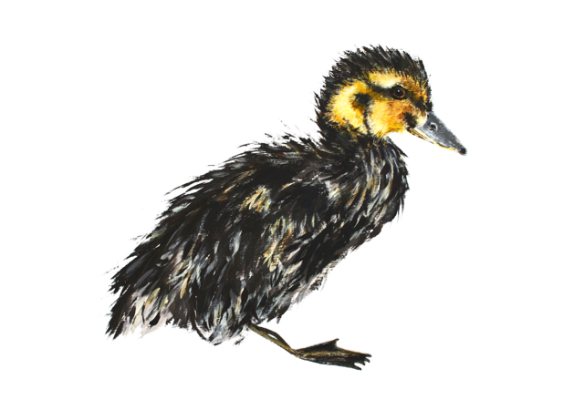 Jill Meager, Duckling | Slightly Foxed Editors' Diary