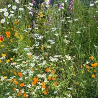 Meadow flowers | Slightly Foxed Editors' Diary