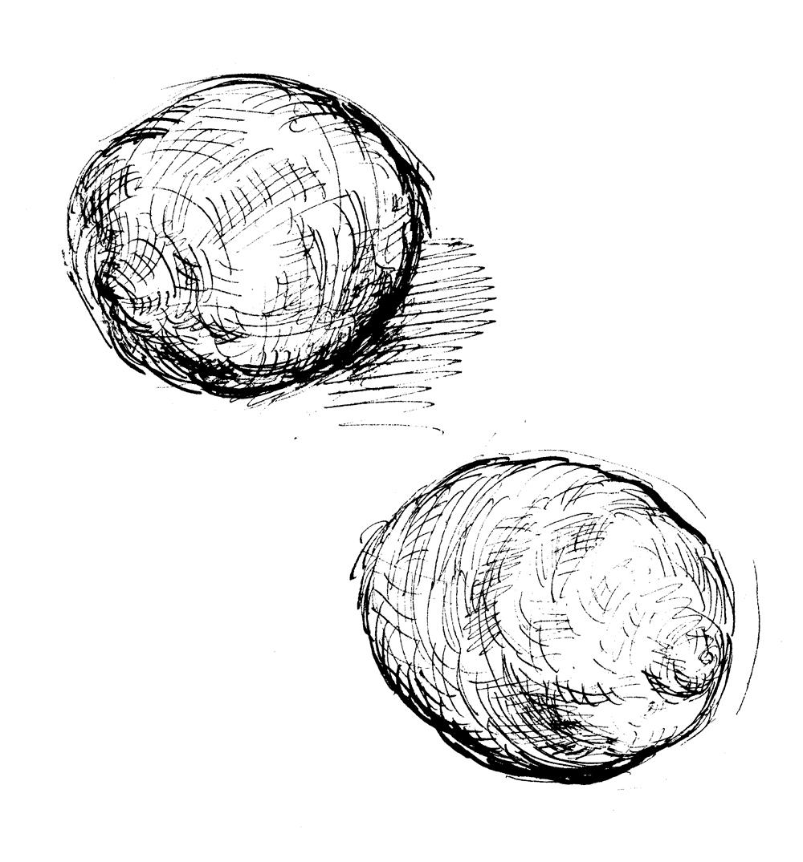 Martin Yeoman illustration | Kate Young on Joan Lindsay, Slightly Foxed 66