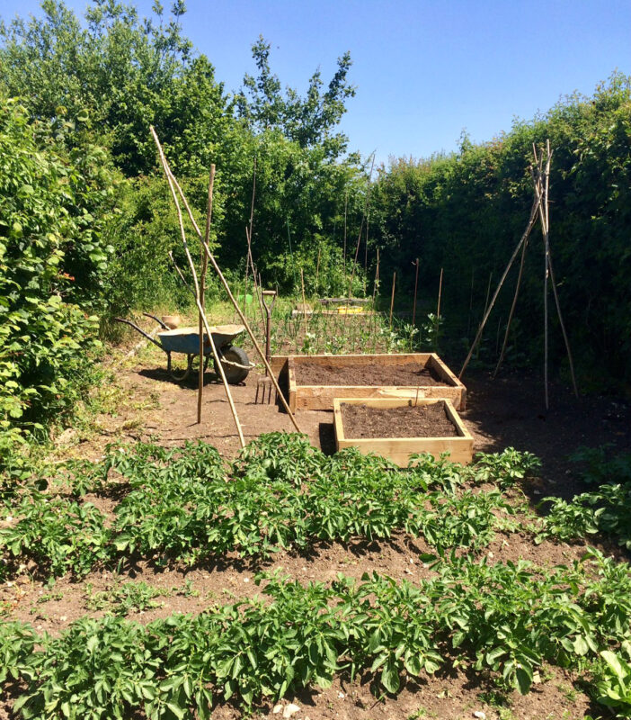 The Vegetable Patch | Slightly Foxed Editors' Diary