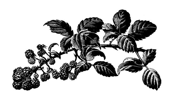 Clare Leighton, Blackberries | Slightly Foxed Editors' Diary