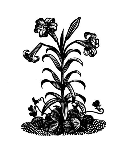 Reynolds Stone wood engraving, Rachel Kelly-on the consolation of poetry, SF Issue 71